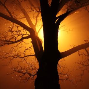 SEC-COURSES-TREES
